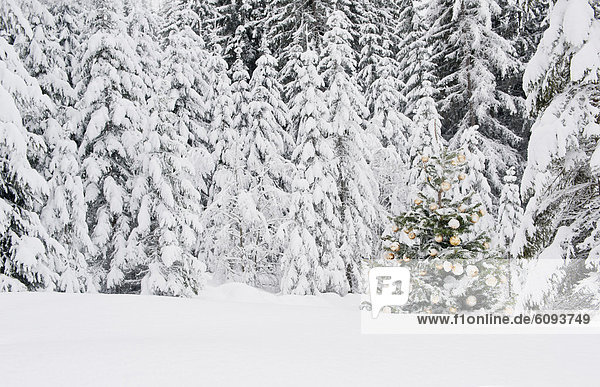 Austria  Salzburg County  Christmas tree in snow