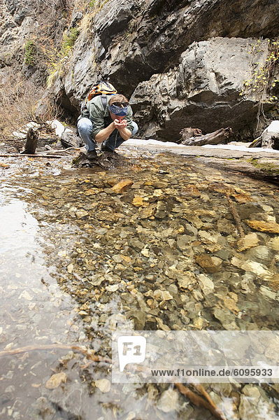 A young man drinks from a stream running through Big Cottonwood Canyon  Salt Lake City  UT.