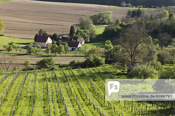 Österreich  Steiermark  Blick auf Weinberg bei Straden
