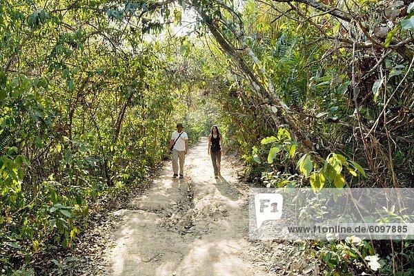 Fröhlichkeit  Hochzeit  gehen  Weg  jung  Regenwald