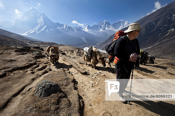 A trekker in Nepal looks over his shoulder at the approaching yak train.