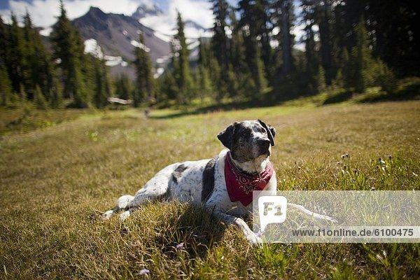 ruhen  Ereignis  Hund  Hintergrund  wandern  September