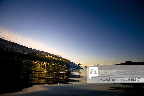 Strand drehen Boden Fußboden Fußböden Reh Capreolus capreolus Wellenreiten surfen