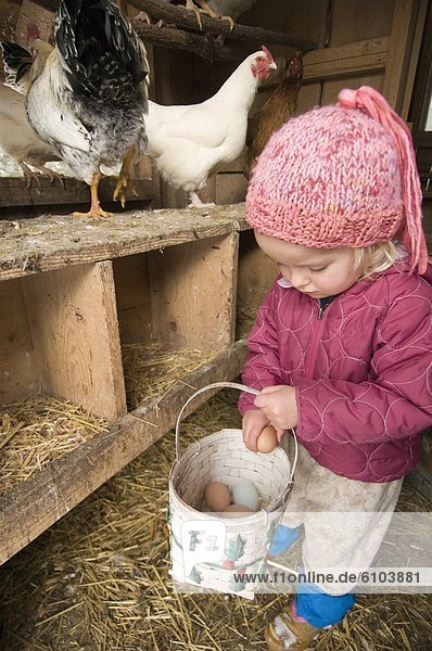 Frische geselliges Beisammensein Huhn Gallus gallus domesticus jung Mädchen