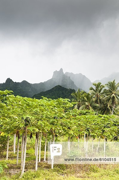Cook-Inseln  Rarotonga