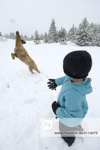 werfen  Junge - Person  fangen  Hund  Colorado  San Juan National Forest  Schneeball