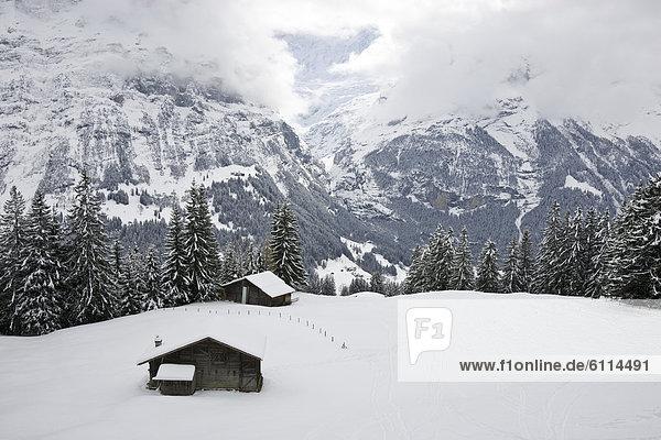 nahe Hütte bedecken Berg Feld Ansicht grasen Grindelwald Schnee Schweiz