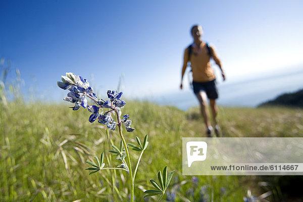 Frau  Blume  Hügel  Küste  wandern  Fokus auf den Vordergrund  Fokus auf dem Vordergrund  vorwärts  Wiese