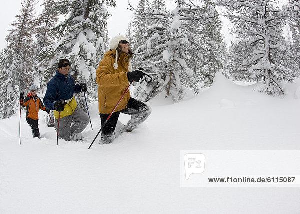 Laubwald  Biegung  Biegungen  Kurve  Kurven  gewölbt  Bogen  gebogen  Mensch  Menschen  Gesichtspuder  Ansicht  3  Seitenansicht  tief  Oregon  Schneeschuhlaufen