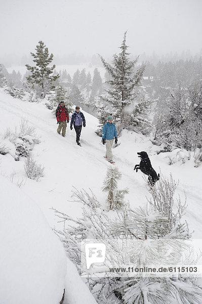 hoch  oben  Biegung  Biegungen  Kurve  Kurven  gewölbt  Bogen  gebogen  gehen  folgen  Hund  Ansicht  Flachwinkelansicht  1  3  Winkel  Oregon  Schnee
