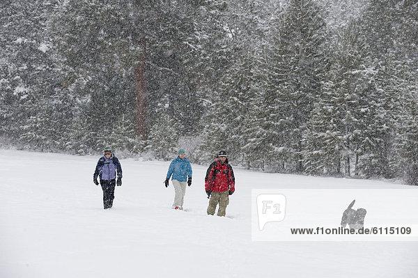 Biegung  Biegungen  Kurve  Kurven  gewölbt  Bogen  gebogen  gehen  folgen  Hund  schwarz  frontal  Ansicht  1  3  Oregon  Schnee