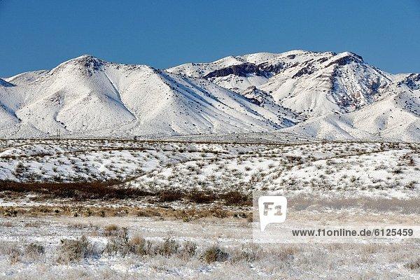 Vereinigte Staaten von Amerika  USA  Berg  Frische  New Mexico  Schnee