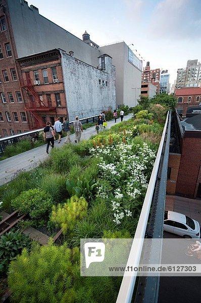 Vereinigte Staaten von Amerika  USA  New York City  Blume  Manhattan