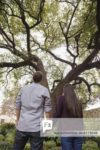 sehen  Baum  halten