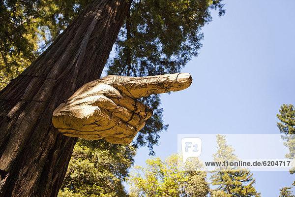 zeigen  Baum  Ast  schnitzen zeigen ,Baum ,Ast ,schnitzen