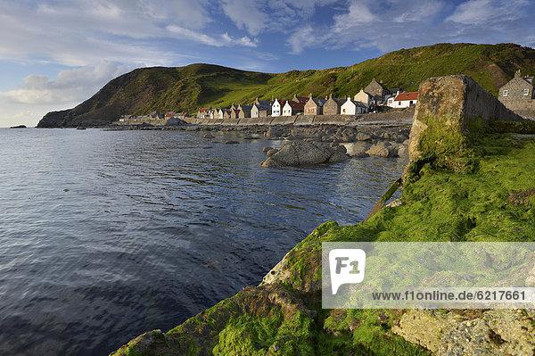 Felsbrocken Europa Großbritannien Landschaft Küste grün Alge Kai groß großes großer große großen Schottland