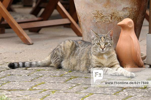 Getigerte Katze liegt vor Tonfigur