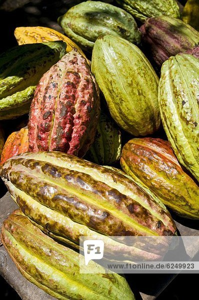Kakao,  heiße Schokolade,  Trinkschokolade,  , Baum , Frucht , Schokolade , Afrika , Madagaskar, Kakao,  heiße Schokolade,  Trinkschokolade,  , Baum , Frucht , Schokolade , Afrika , Madagaskar