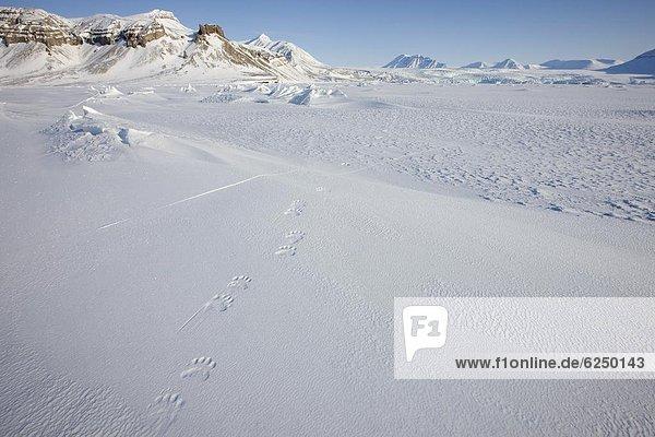 Europa  Norwegen  Spitzbergen  Arktis  Skandinavien  Svalbard
