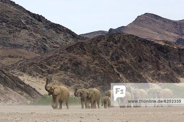 Gebäude  Herde  Herdentier  Wüste  Elefant  Namibia  Afrika