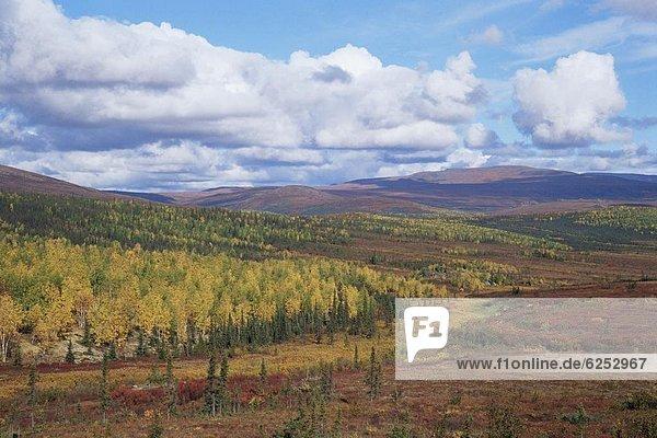 Fall colors  Dalton Highway  Alaska  United States of America  North America