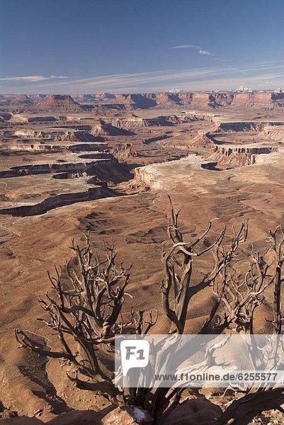 Vereinigte Staaten von Amerika  USA  Baum  grün  Ignoranz  Fluss  Nordamerika  Fokus auf den Vordergrund  Fokus auf dem Vordergrund  Wacholder  Utah