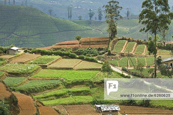 nahe  Alternative  Hügel  Nutzpflanze  wichtig  Asien  Sri Lanka  Tee