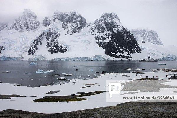 gehen  Tourist  Insel  Antarktis  Pinguin