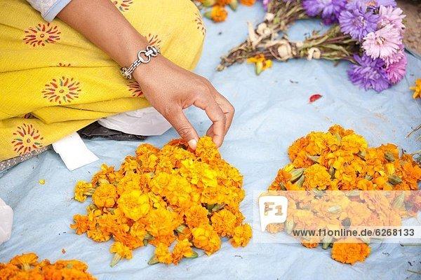 Kathmandu  Hauptstadt  gebraucht  Blume  Verkäufer  Heiligkeit  Ringelblume  Calendula officinalis  Altar  Tempel  Opfergaben  Buddhismus  Asien  Nepal