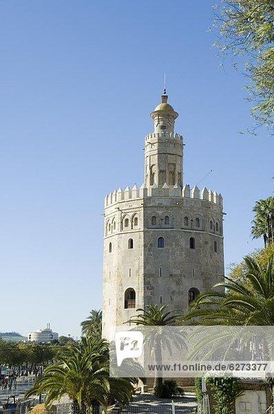 Europa  Sevilla  Spanien  Torre Del Oro