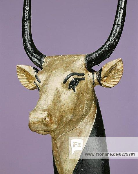 Nordafrika Hausrind Hausrinder Kuh Entdeckung Tal Heiligkeit König - Monarchie Afrika Kuh Ägypten vergoldet Grabmal