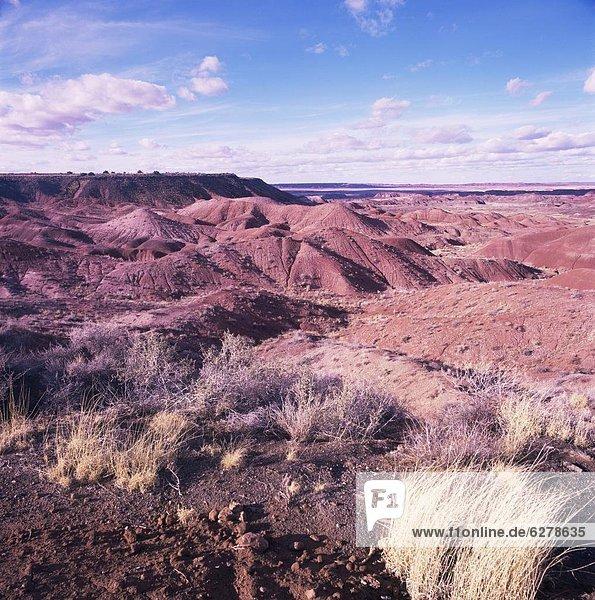 Vereinigte Staaten von Amerika  USA  Nordamerika  Painted Desert