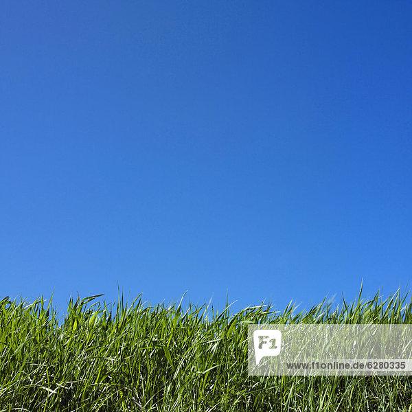Gras  blauer Himmel