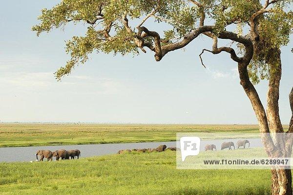 Afrika  Botswana