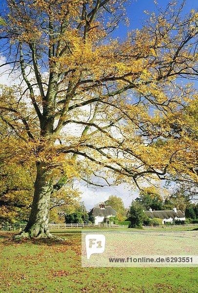 Großbritannien Landhaus Wald England Hampshire