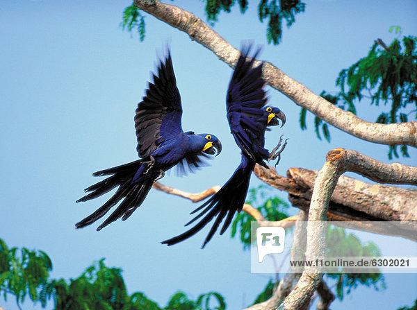 Brasilien  Pantanal