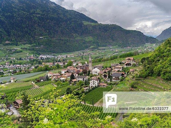 Trentino Südtirol  Europa  Frucht  Tal  Fluss  Dorf  umgeben  Weinberg  Plantage  Algund  April  Mitteleuropa  Italien