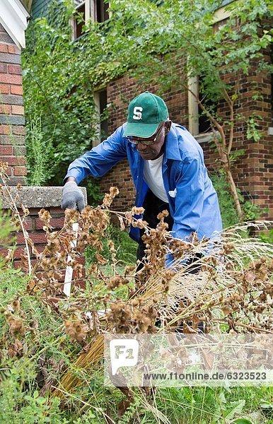 hoch oben Wohnhaus schneiden Morgen Reinigung Straße Unkraut Seegras 2 verlassen 1 Geld ausgeben leer 3 Größe Mitglied Verein Detroit Stunde Michigan Samstag