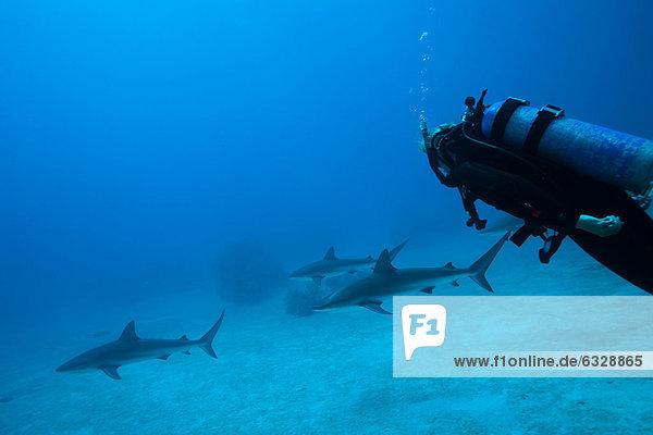 Scuba diver and sea life  underwater view