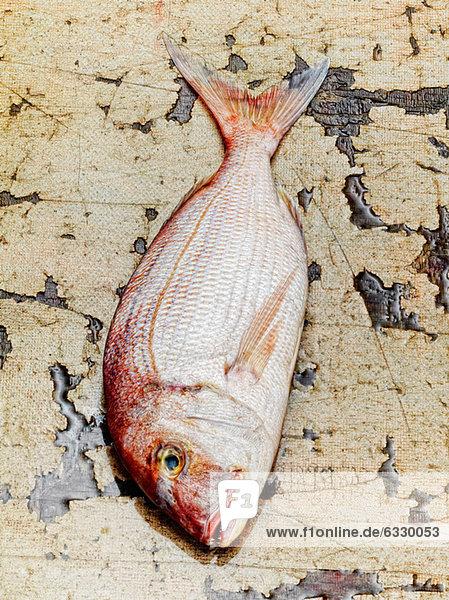 Dorade-Fisch