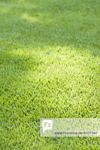 Grünen Rasen  full-frame Grünen Rasen, full-frame