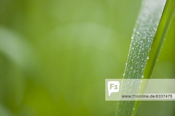 Wassertropfen  Tropfen  Tau  Tautropfen  Gras Wassertropfen, Tropfen ,Tau, Tautropfen ,Gras