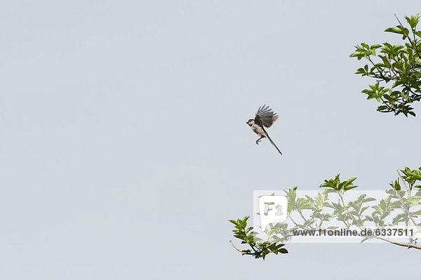 In der Luft schwebend  Vogel  fliegen  fliegt  fliegend  Flug  Flüge In der Luft schwebend ,Vogel ,fliegen, fliegt, fliegend, Flug, Flüge