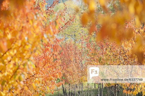 Farbaufnahme Farbe zeigen Baum Laub Farbaufnahme,Farbe,zeigen,Baum,Laub