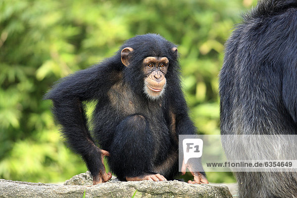 10254-00428-249,Affe,Afrika,Erwachsener,Familie - Mensch