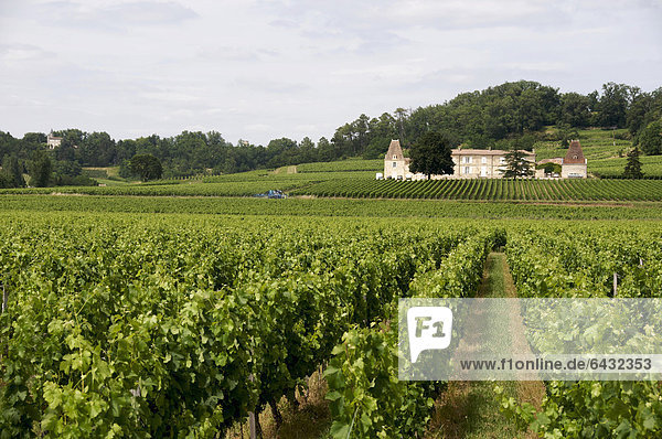 Weinberg in Saint-Emilion  Gironde  Aquitanien  Frankreich  Europa
