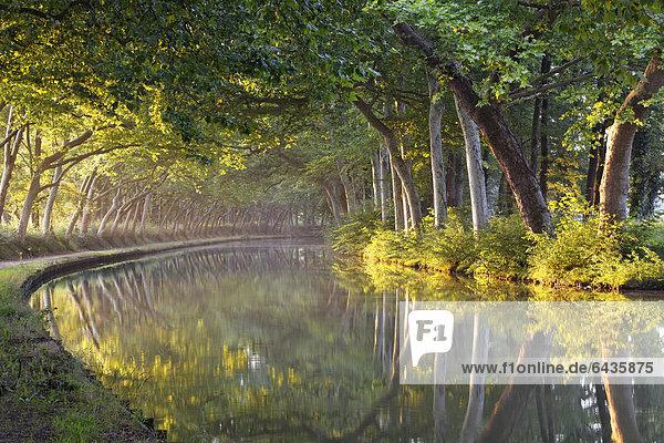 Canal du Midi zwischen Argens-Minervois und Negra  bei …cluse de l'Ocean  Pk 51  6  Avignonet-Lauragais  Carcassonne  Region Languedoc-Roussillion  DÈpartement Aude  Frankreich  Europa
