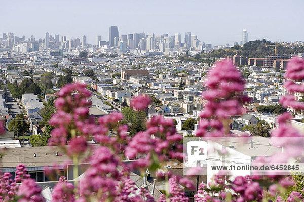 Stadtansicht  San Francisco  Kalifornien  USA Stadtansicht, San Francisco, Kalifornien, USA