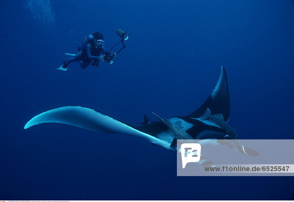 Mandatory Credit: Photo by Tom Campbell / SplashdownDirect / Rex Features ( 842645a ) Giant manta ray & photographer on scuba (Manta biostris). Mexico MARINE WILDLIFE