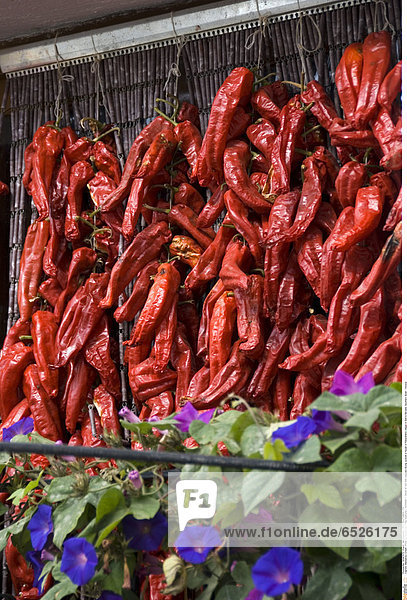 Mandatory Credit: Photo by Kevin Foy / Rex Features ( 941298af ) Detail of red chilli peppers drying outside a house in Pampaneira village in Sierra Nevada. Southern Spain Various